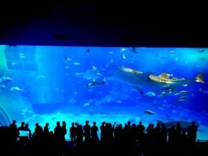 美ら海水族館☆