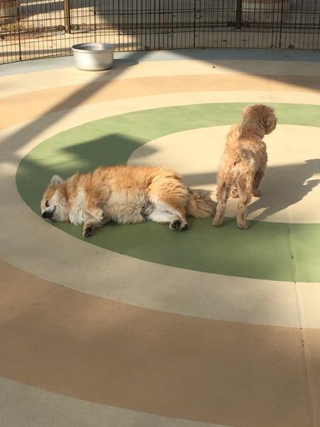 犬好きな方にオススメスポットです♪(´ε` )